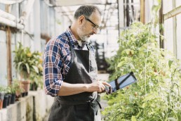 Green IT Solutions For Small Businesses